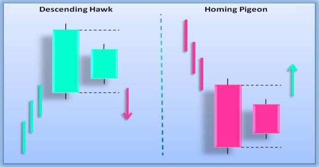descending hawk homing pigeon